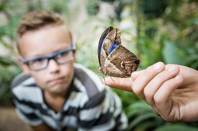 Vlinderschuur