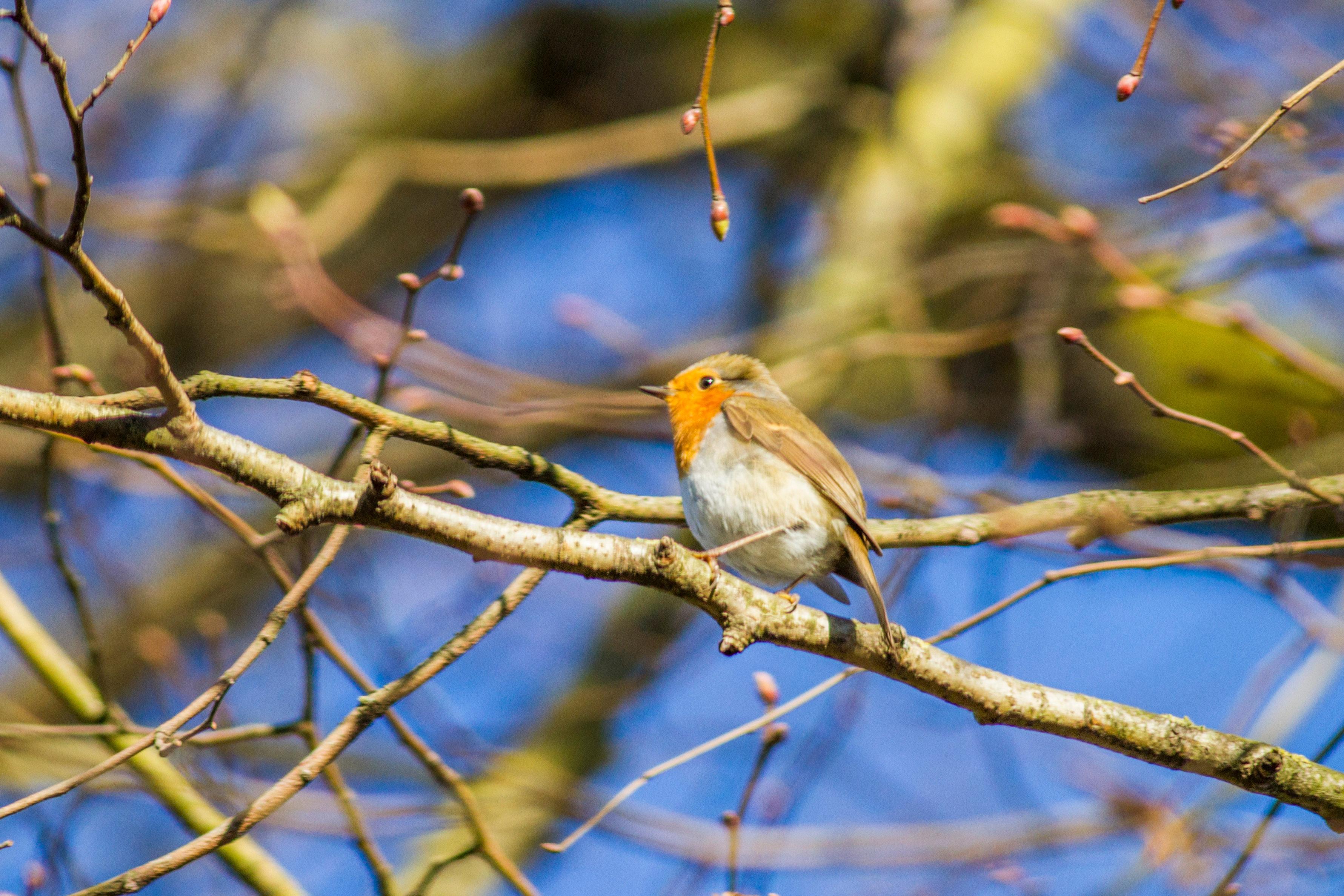 Balade guidée à la découverte des oiseaux