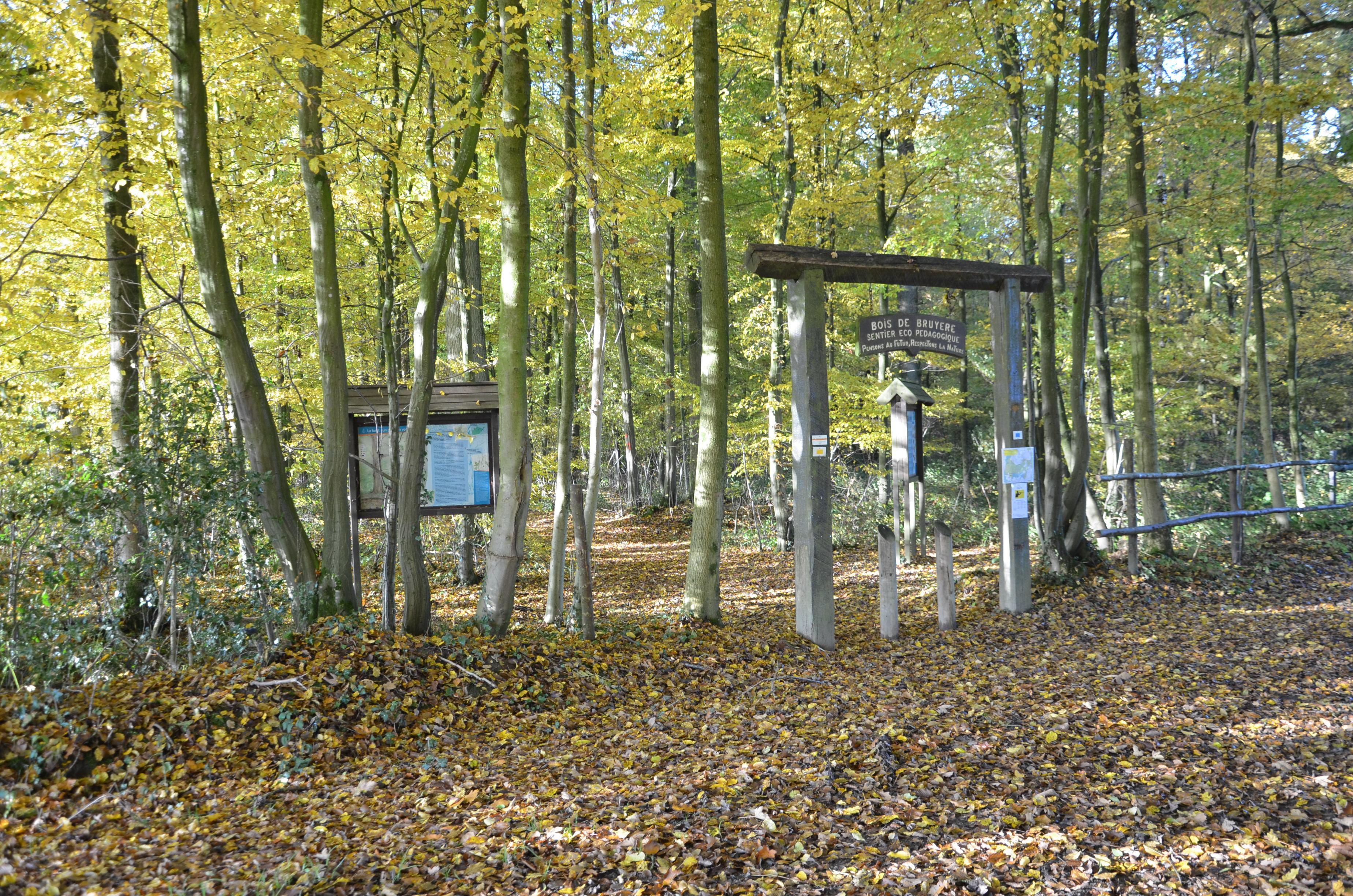 Grande Traversée de la Forêt du Pays de Chimay-Tronçon Sivry-Virelles