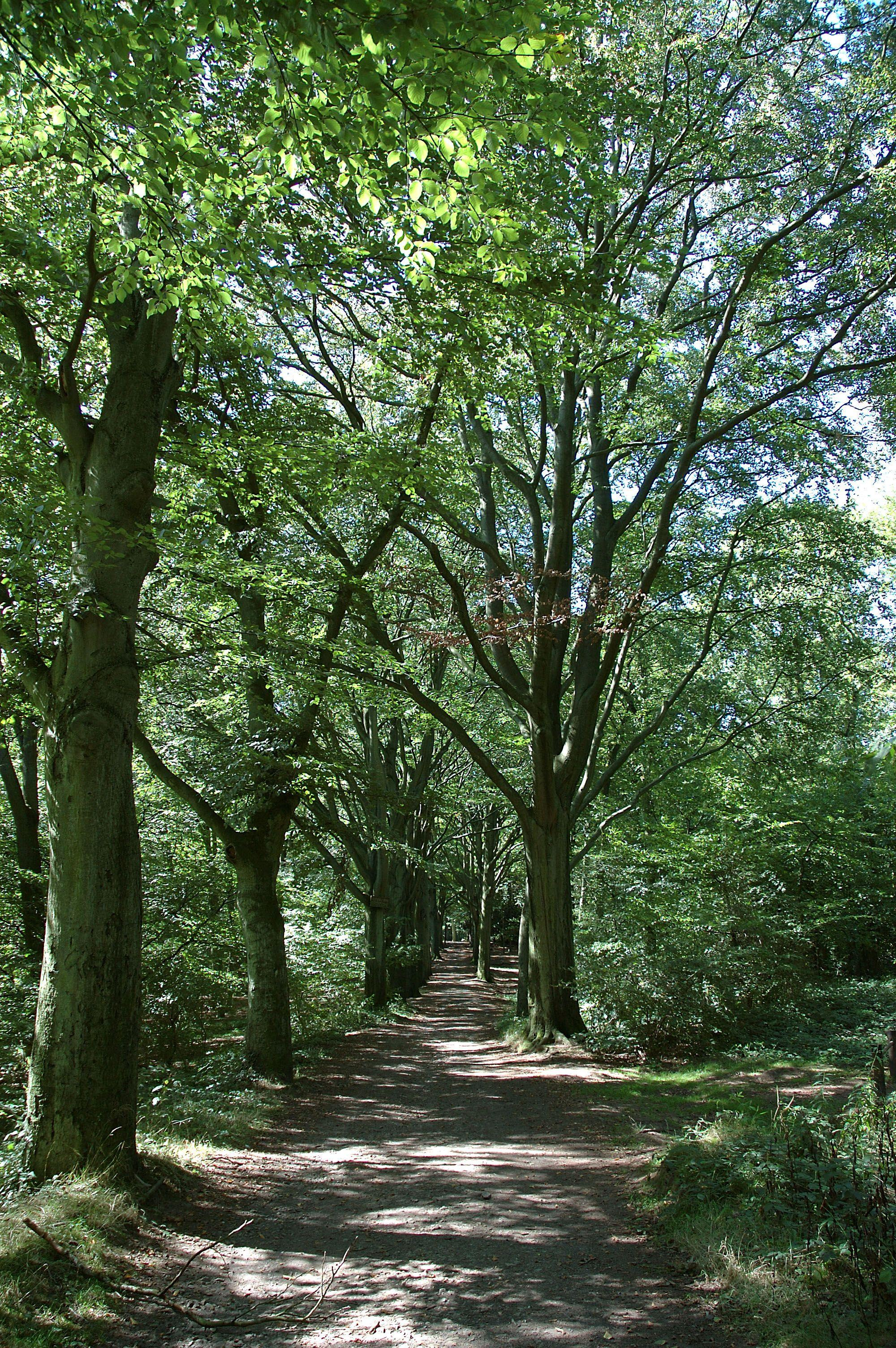 Promenade du Bois de Bruyère - Sautin
