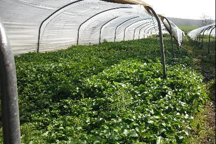 Eustache watercress producer