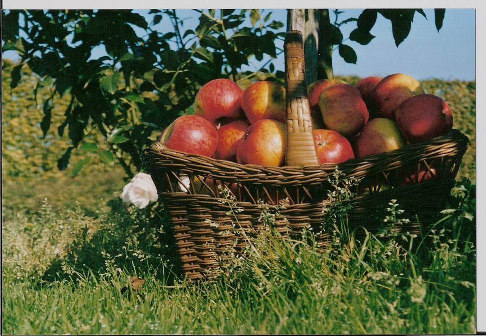 Les fruits du domaine de la Pommeraie