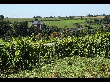 Dalaheim Castellum wijn