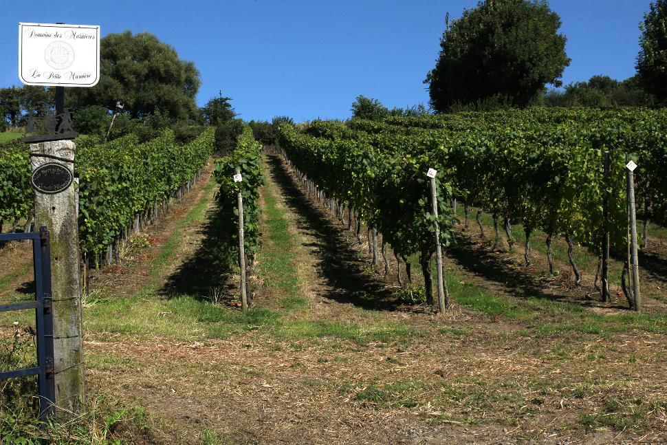 Domaine Les Marnières - Dalhem - Vignes