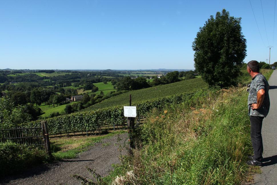 Domaine Les Marnières - Dalhem - Vignes et paysage