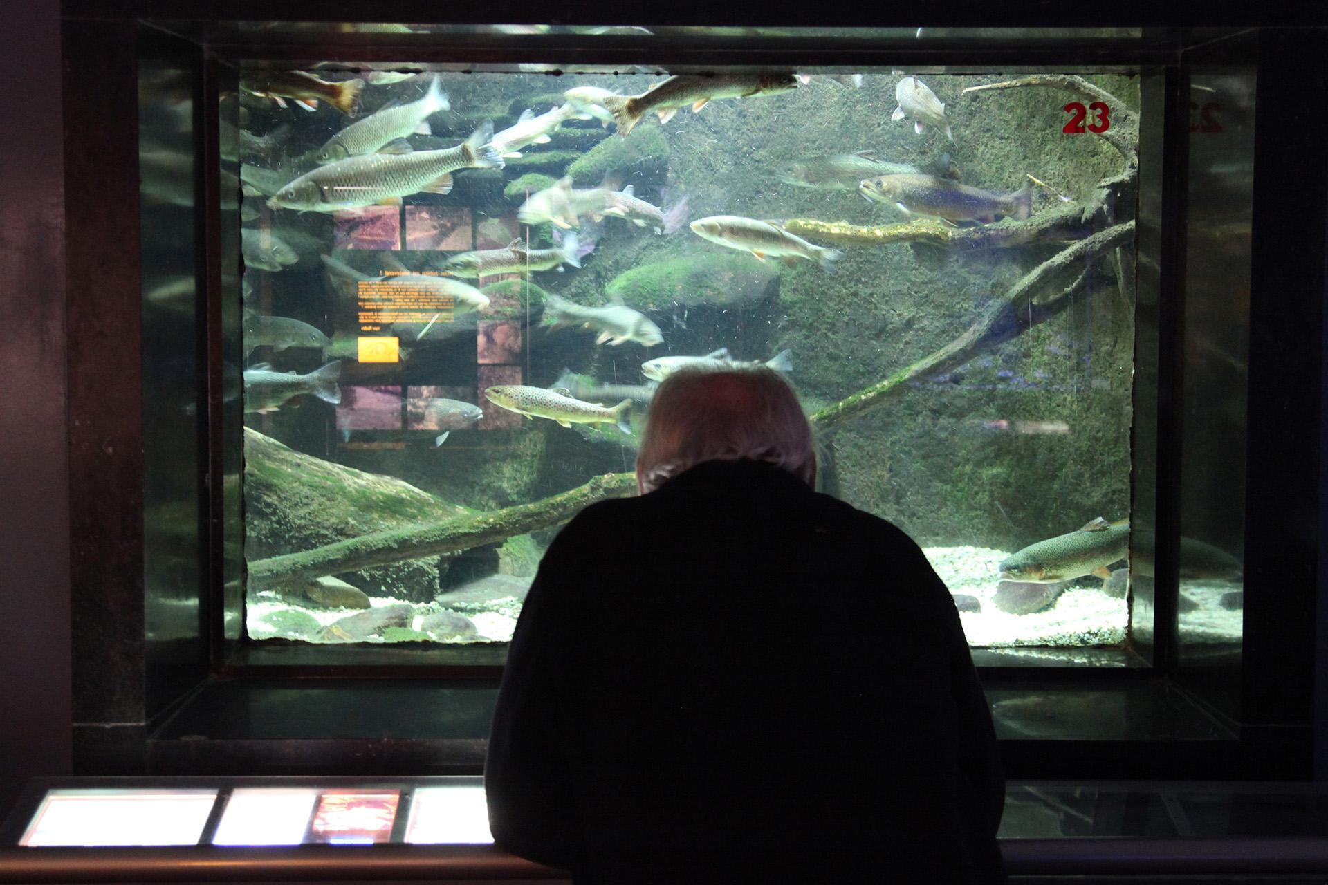 Aquarium-Museum - Liège - Aquarium