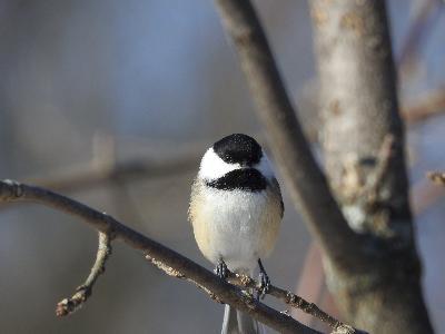 Visite guidée ornithologique à Baelen