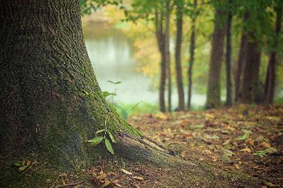 Balade à la découverte des animaux, des champignons et des géants de nos forêts