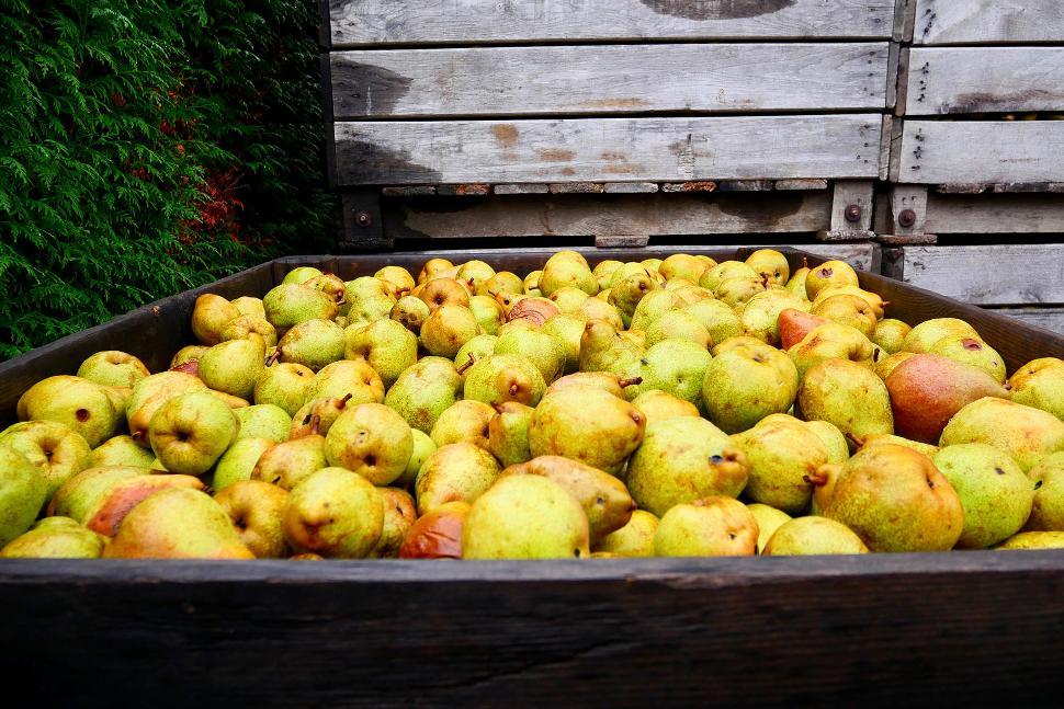 Siroperie Artisanale D'Aubel - Pommes