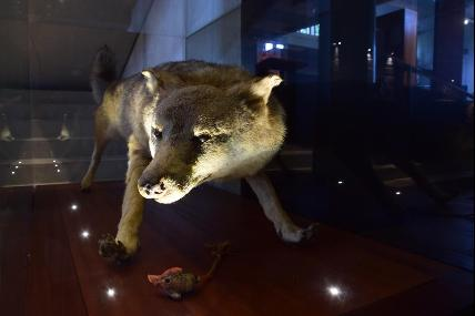 NEM - Nature Extraordinary Museum