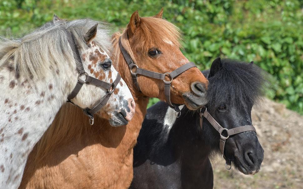 Pony-3779312_1920