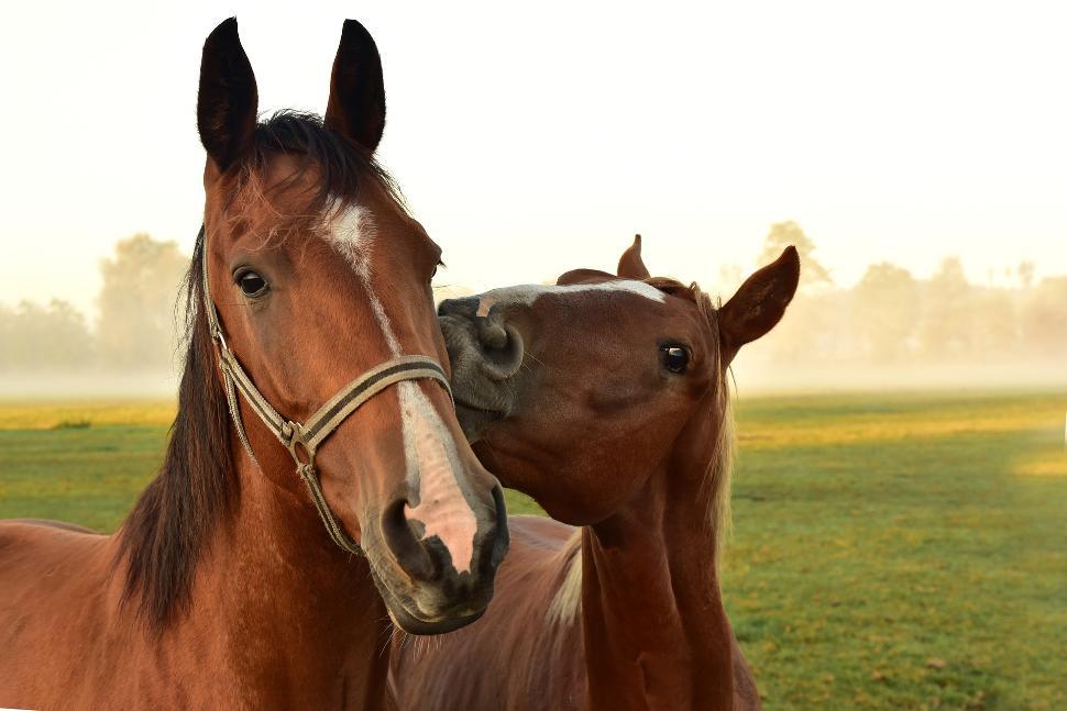 Horses-3747374_1920