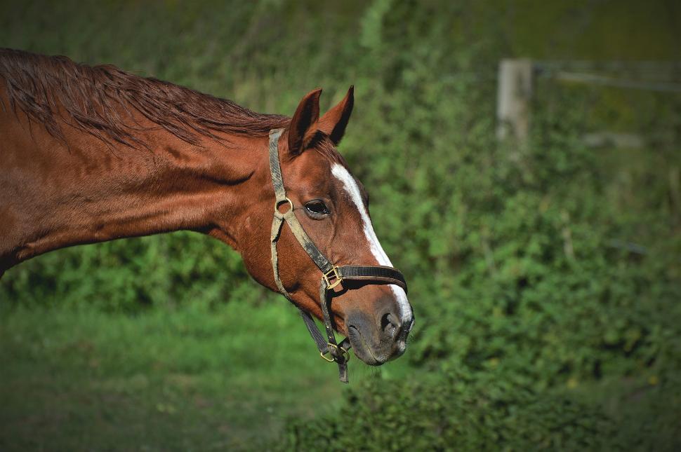 Horse-4659576_1920