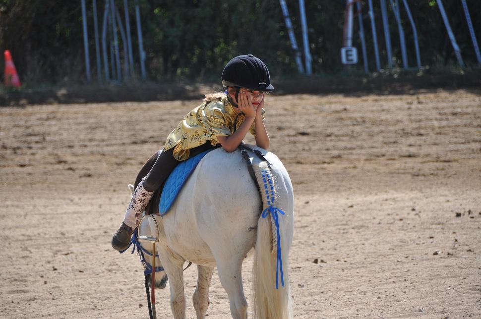 Poney-horse