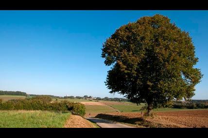 Promenade 6 Florée-Maibelle