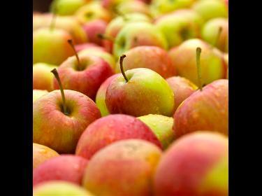 Sirop de pommes et de poires