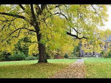 Arbres remarquables du parc de l'Abbaye du Val-Dieu