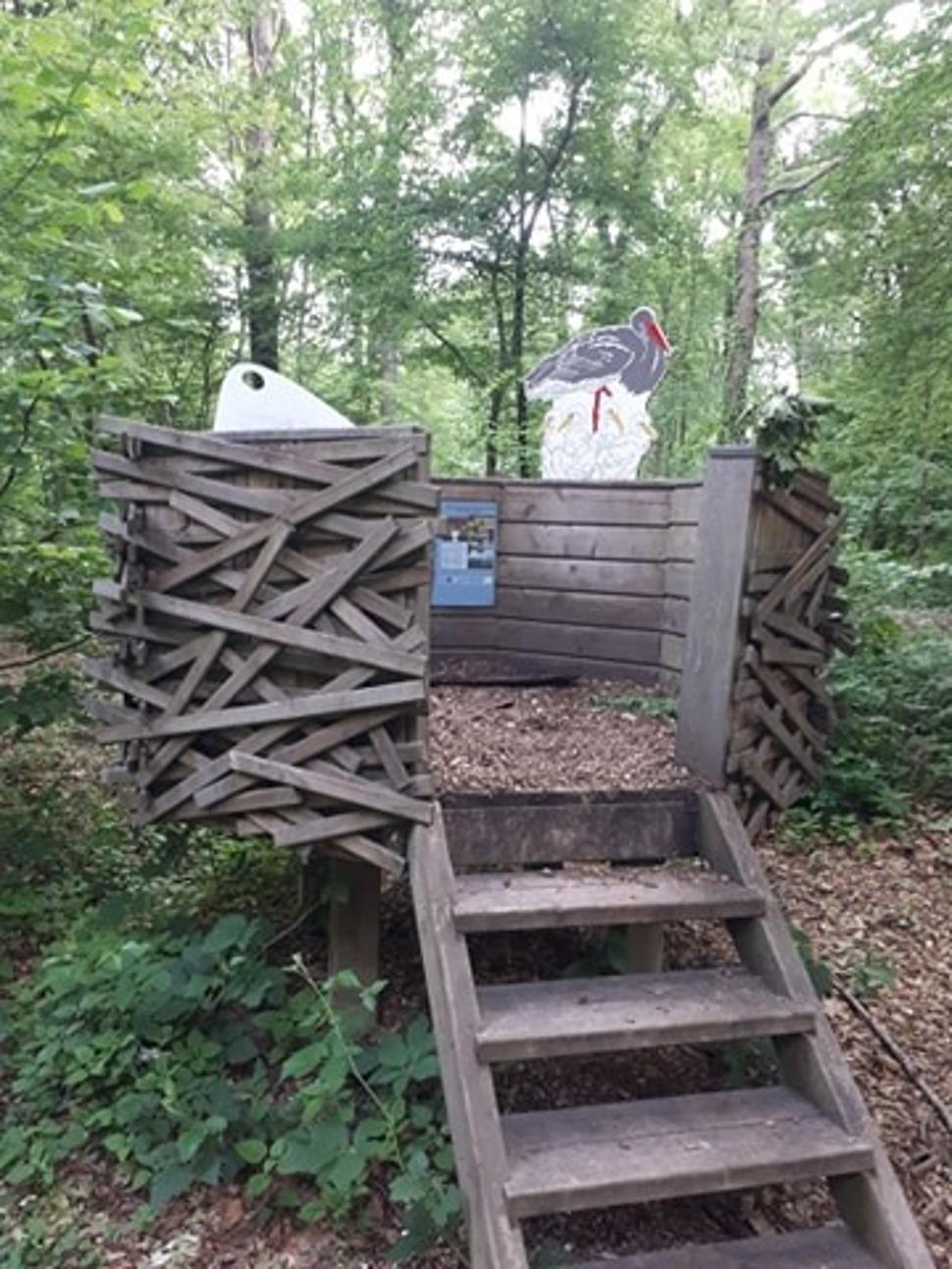 Parcours didactique - bois de Gesves - Module Cigogne Noire