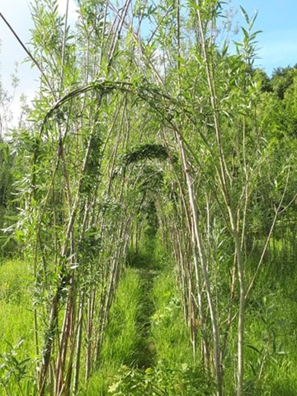 Parcours didactique - bois de Gesves - Oeuvre Sentiers d'Art