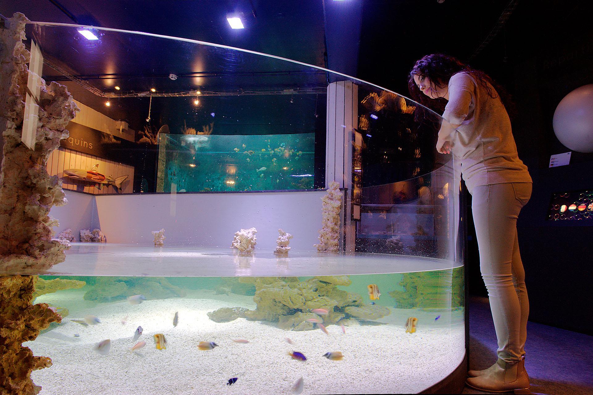 Aquarium-Muséum Liège - Lagon
