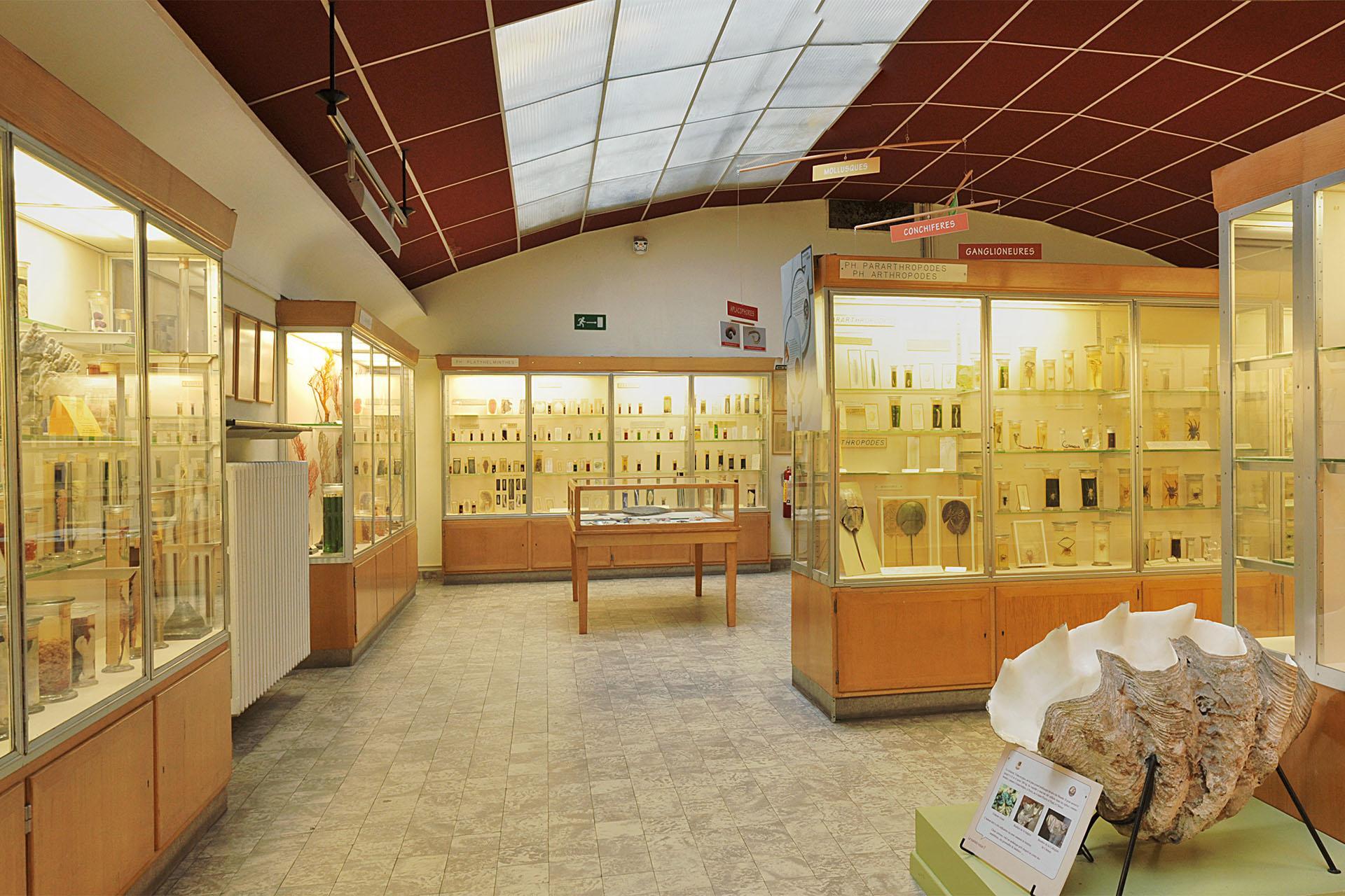 Aquarium-Muséum Liège