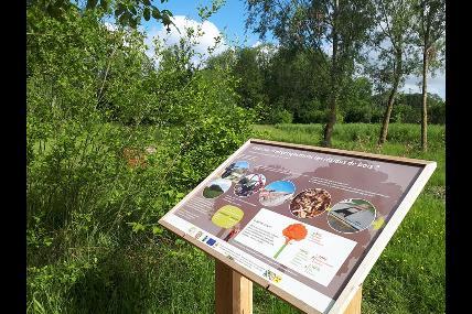 Bois communale de Gesves
