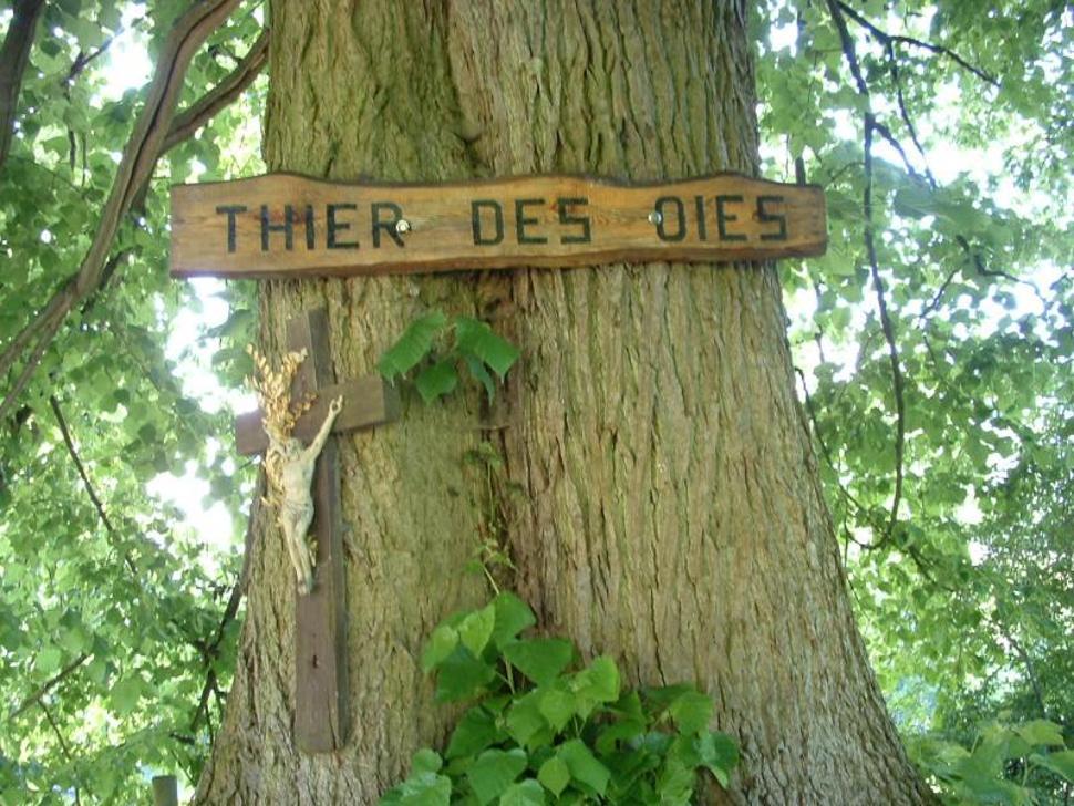 THIMISTER-THIER DES OIES-balade guidée Nature