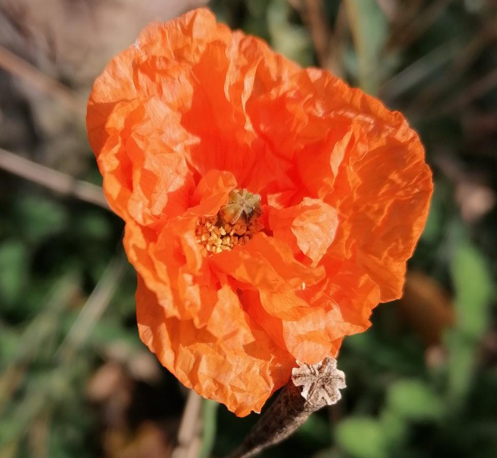 PEPINSTER_Soiron en fleurs_NathalieGoffin
