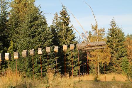 « 4 saisons au coeur de l'Ar(t)boretum de Mefferscheid »: « Visite nature et artistique de l'arboretum »
