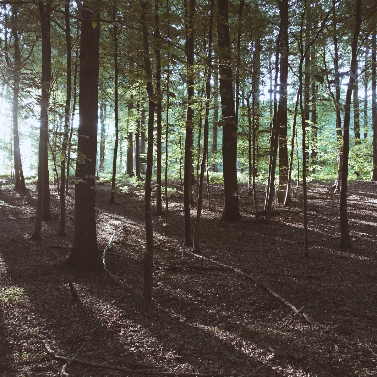 Promenade du Bois de Bruyère