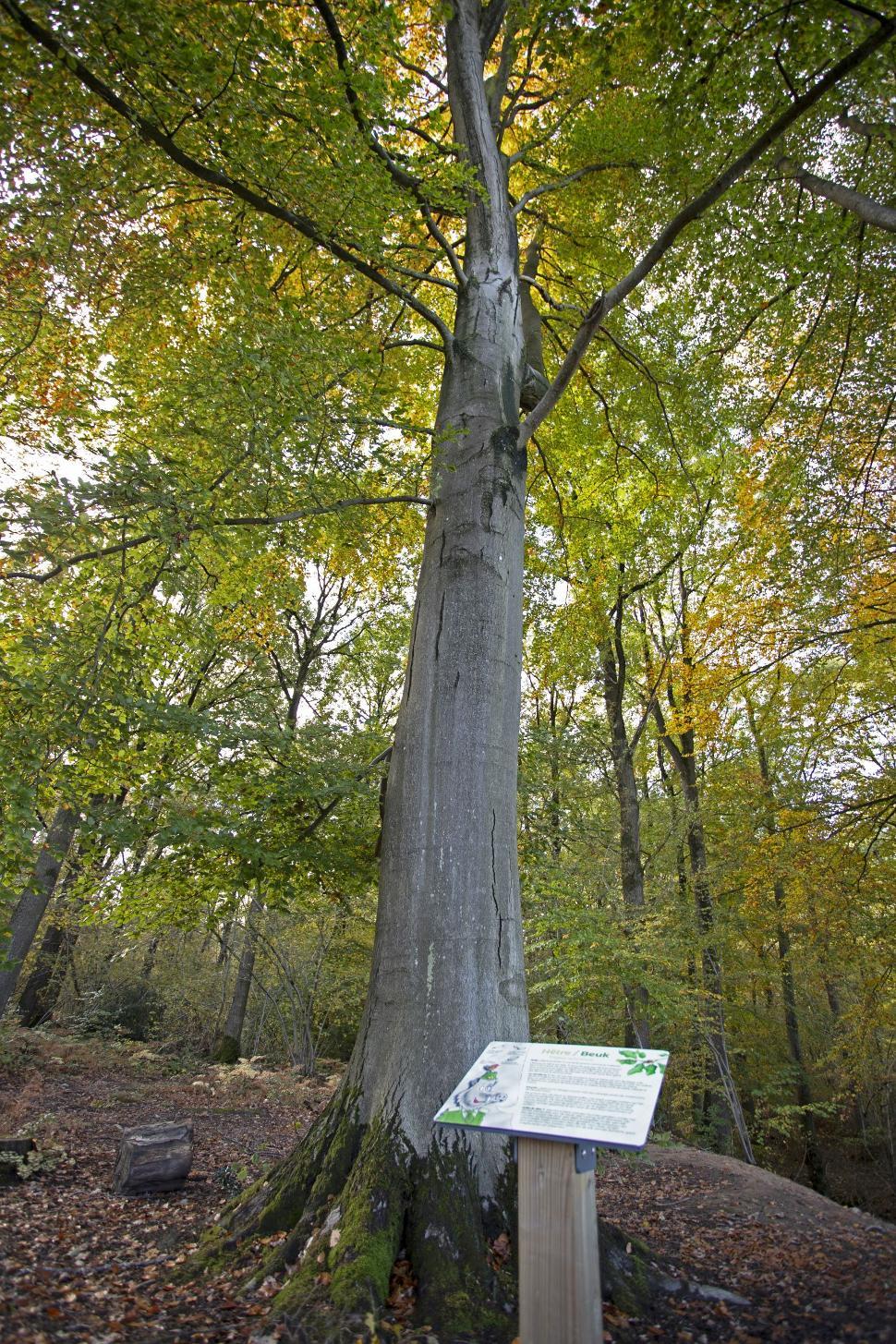 Panneau arboretum bois did Courrière 2020 - D. Steenhaut - light
