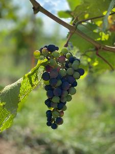 Balade des vignobles