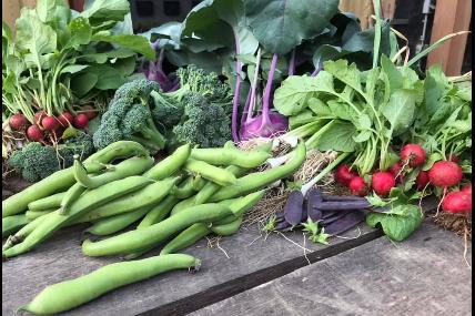 Légumes Etcétéra