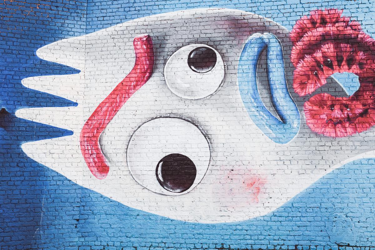 Carolo (Charleroi) Street Art Tour