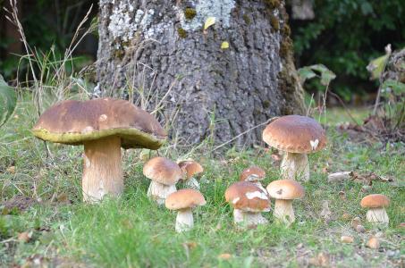 Mushrooms, a world apart 2