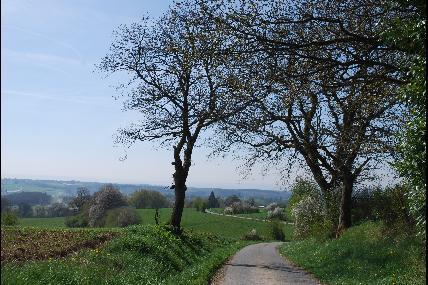 Promenade du Tige de Ronvaux