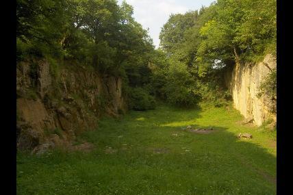 Promenade guidée - Bois Renard et le Chafour