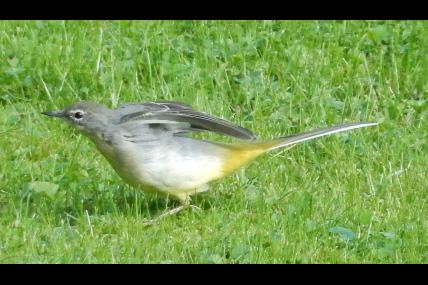 Promenade guidée - Balade ornithologique