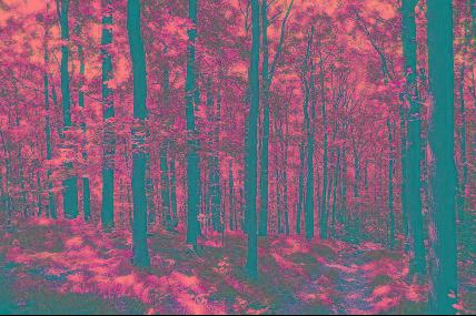 Promenade guidée - Les arbres de la Reine et le Chincul