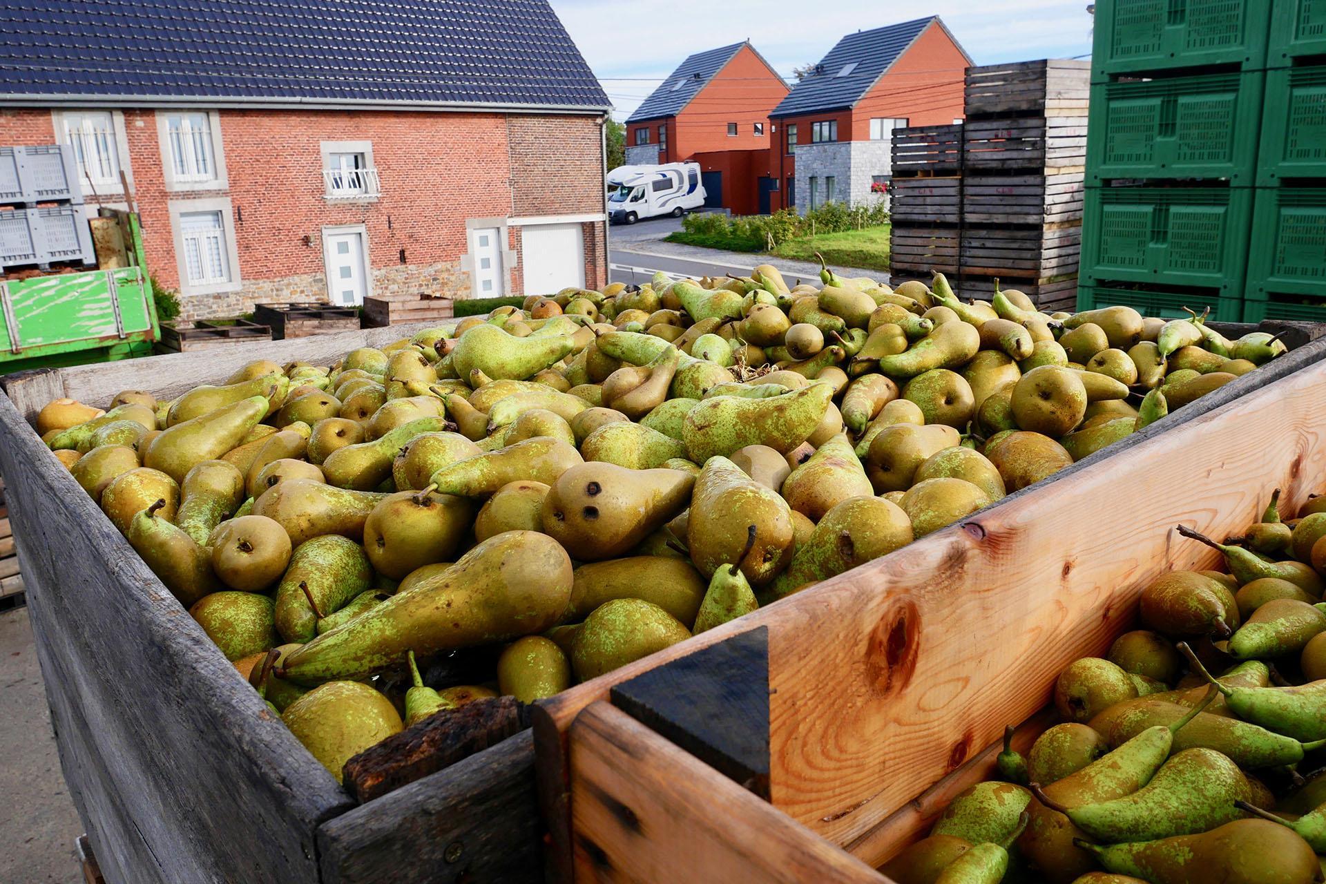 Siroperie Artisanale D'Aubel - Caisses de pommes