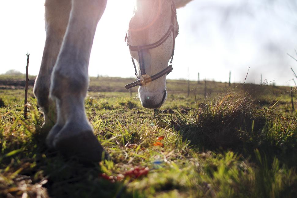 Canva - Closeup Photography of Horse Standing on Green Grass